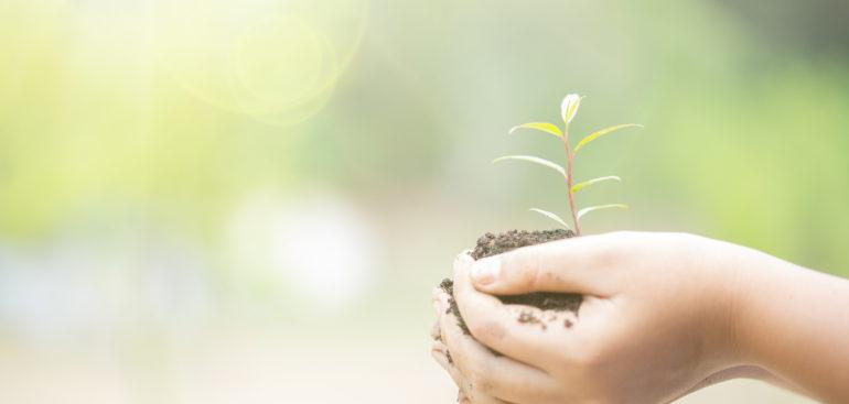 ormeo partenaire de votre croissance durable